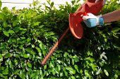 stock photo of electric trimmer  - Woman trimming bushes in her backyard using an electrical hedge trimmer - JPG