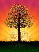 image of apple tree  - Apple tree in the evening  - JPG