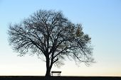 stock photo of loneliness  - Lonely tree with bare branches in winter and empty bench against clear sky. 
