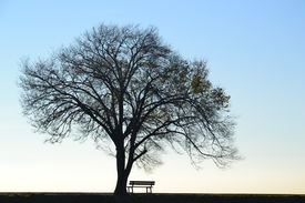 stock photo of winter trees  - Lonely tree with bare branches in winter and empty bench against clear sky. 