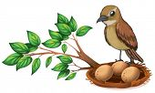 pic of jungle birds  - Illustration of a bird at the branch of a tree watching the nest on a white background - JPG