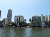 picture of tree lined street  - Ala Wai Canel in Waikiki on the island of Oahu in the state of Hawaii - JPG