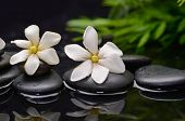 foto of gardenia  - Two gardenia flower and plant on pebbles  - JPG
