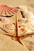stock photo of echinoderms  - closeup of a starfish and some seashells on the sand of a beach - JPG