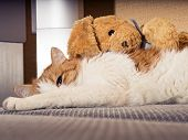 foto of animal cruelty  - Portrait of yellow sad sick cat lying at home with rabbit toy - JPG