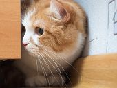foto of animal cruelty  - Portrait of yellow scared cat hiding at home - JPG
