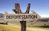 picture of deforestation  - Deforestation wooden sign with a desert background  - JPG