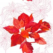 picture of poinsettias  - Seamless pattern  with poinsettia plant - JPG