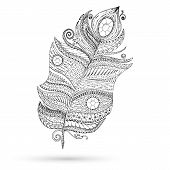 foto of feathers  - Artistically drawn - JPG