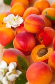 stock photo of apricot  - Background of fresh apricots with flowers - JPG