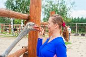 stock photo of feeding  - Young attractive woman feeding ostrich  - JPG