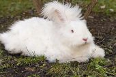 stock photo of eat grass  - Cute fluffy angora bunny rabbit sitting on grass and eating parsley - JPG