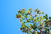 pic of dogwood  - Branches of dogwood  - JPG