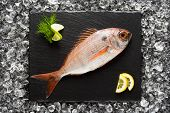image of red snapper  - Fresh red snapper fish on a black stone plate top view - JPG