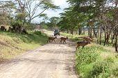 stock photo of antelope horn  - antelope on a background of road - JPG