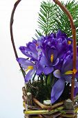 picture of cowslip  - flower arrangement - JPG