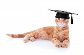 stock photo of wise  - Graduate ginger pet cat in a costume - JPG