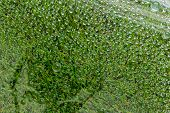 stock photo of raindrops  - Water drop droplet raindrop of grass background - JPG