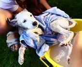 stock photo of wash-basin  - kids wash stray white puppy in yellow basin on the summer garden background - JPG