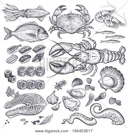 Seafood fish shrimp crab lobster octopus mollusks Japanese sushi isolated  graphic black ink on a white background a set  Vintage engraving