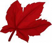 pic of chloroplast  - illustration of leaf on a white background - JPG