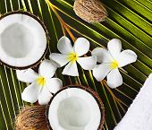 Постер, плакат: Spa объектов кокосы цветы полотенце на пальмовый лист