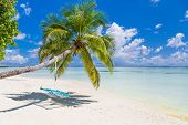 Beautiful Beach Landscape. Swing On Palm Trees Over Shallow Sea Water, Idyllic Beach Scene. Summer H poster