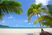 Beautiful beach with palm trees on white sand. Exotic travel destination poster