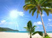 Постер, плакат: Тропический пляж с пальмами у синего моря Экзотические летние каникулы