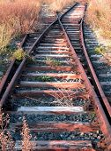 picture of train track  - Railway switch abandoned invaded by the bush and the weed - JPG