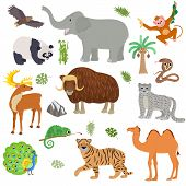 Asian Animal Vector Animalistic Wild Character Tiger Camel Panda In Asia Wildlife Illustration Set O poster