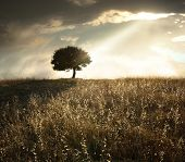 picture of dry grass  - a ray of light breaks through the dramatic sky at sunset and hit an oak tree solitary - JPG