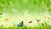 image of photosynthesis  - Spring background with butterflies - JPG