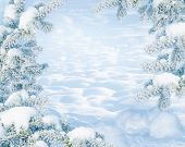 Winter Christmas Scenic Landscape On Frosty Sunny Day With Fir-trees Covered With White Snow Close-u poster