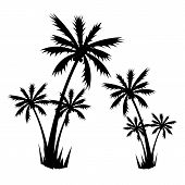 Tropical Palm Tree Vector Silhouettes Isolated On White Background. Black Silhouette Palm Tree, Illu poster
