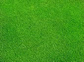 stock photo of clos  - Green grass - JPG