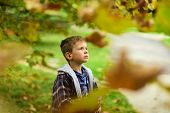Hope And Dreams. Little Boy Full Of Hope For Bright Future. Little Boy Daydreaming In Garden. I Do H poster