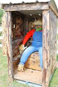 pic of outhouses  - Scarecrow in an outhouse - JPG