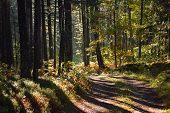 Morning Light In Forest Nature. Lonely Road In Forest Nature. Sunlight In Forest Nature After The Ra poster