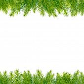 stock photo of conifers  - Christmas Tree Borders - JPG