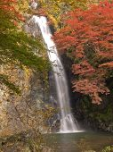 pic of minos  - Autumn at Minoh waterfall in Osaka Japan - JPG