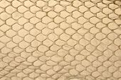 Shed snake skin scales background texture