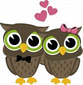 image of bigeye  - cute owls in love isolated on white background - JPG