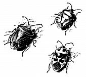 picture of shield-bug  - Three shield bugs close - JPG