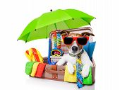 stock photo of fin  - summer vacation dog in bag full of holiday items - JPG
