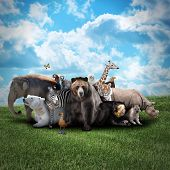 image of creatures  - A group of animals are together on a nature background with text area - JPG
