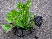 pic of unbelievable  - outdoors photography of sprout growing through the asphalt - JPG