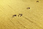 stock photo of dog footprint  - Dog footprint on the sand at the beach - JPG