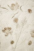 picture of mulberry  - Mulberry paper with dry flower texture background - JPG