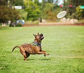 stock photo of spayed  -  a cute dog in the grass at a park during summer  - JPG